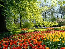spring flower festival in moscow festivals culture u0026 arts