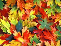 Autumn Colors Autumn Leaves Top Border Wallpaper