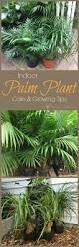best 25 outdoor palm plants ideas on pinterest