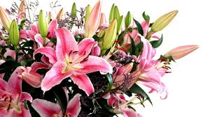 Mother S Day Flower How To Choose Mother U0027s Day Flowers Hr Majesty