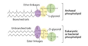 prokaryote structure article khan academy