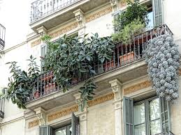 balkon grã npflanzen balkonpflanzen bereichern die wohnung und sind praktisch auf