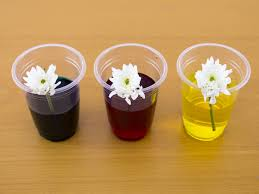 how to dye flowers with food coloring activitybox