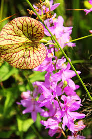 Plants Blooming 26 Best Gardens And Plant Collections Images On Pinterest