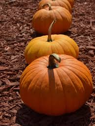 Growing Pumpkins In Containers Hgtv