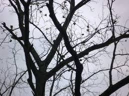 connecticut native plants harvest black walnuts in connecticut uconnladybug u0027s blog