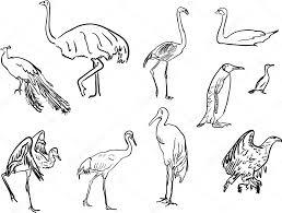 birds sketches collection u2014 stock vector dr pas 84184860