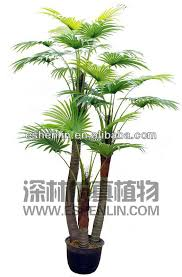 best 25 palm trees for sale ideas on buy palm trees