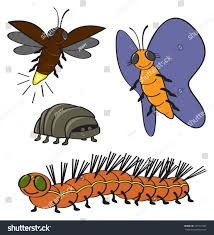 four common backyard garden bugs drawn stock vector 127913441