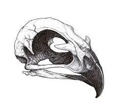 25 beautiful bird skull tattoo ideas on pinterest tattoo flash