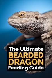 Bearded Dragon Behavior Before Shedding by Ultimate Bearded Dragon Diet Guide What Do Bearded Dragons Eat