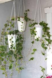 38 best indoor gardens images on pinterest gardening