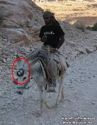 donkey jockey google search random things pinterest humor