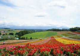 Flower Area - flower land hokkaido holiday ideas things to do