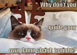 Grumpy Cat Memes Christmas - best 25 grumpy cat christmas meme ideas on pinterest angry cat