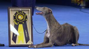 list of breeds at the national show nbc sports