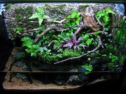 347 best inspirational plant ideas images on pinterest terrarium