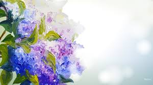 hd hydrangea wallpapers reuun com