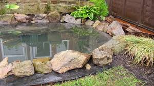 build a pond in your backyard