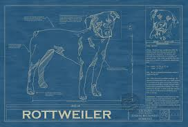 rottweiler animal blueprint company rottweiler dog blueprint