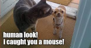 Funny Memes Cats - i can has cheezburger funny animals online cheezburger