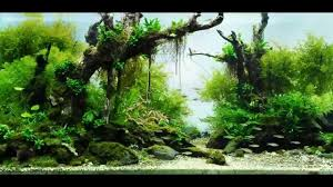 Aquascape Fish Most Beautiful Aquascapes Underwater Landscapes Youtube
