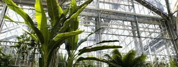 Us Botanical Gardens Dc Us Botanic Garden Washington Dc Dk Eyewitness Travel