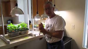 cfl grow lights for indoor plants how to properly grow plants using compact floresent lighting cfl