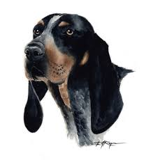 bluetick coonhound forums bluetick coonhound art print signed by artist dj rogers
