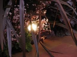 Design Landscape Lighting - landscape lighting design using low voltage garden lighting in