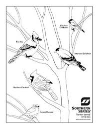 backyard bird coloring pages printable coloring sheets