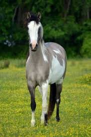 wow amazing color dappled grey horse absurdities pinterest