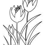 tulips flowers coloring flowers beauty tulip coloring
