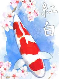 the kohaku koi fish the koi hobby begins and ends with kohaku koi
