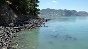 ōtamahua quail island recreation reserve places to visit in