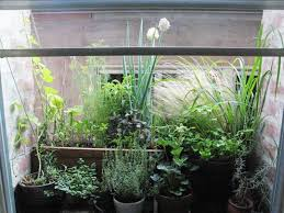 Window Sill Herb Garden Designs Make Mini Herb Garden On A Windowsill Just For Beauty And Home