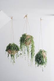 hanging plants indoors vintage interior design with creative