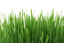 green grass free stock photo
