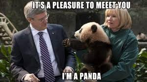 Funny Panda Memes - i can has cheezburger panda funny animals online cheezburger