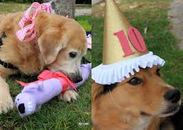 dog birthday party dog and me dog birthday party