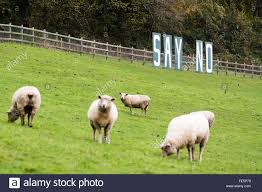 bath uk november 11 2015 say no sign with sheep a sign
