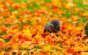 fall with animal widescreen hd wallpapers wallpaper hd