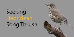 Seeking Song Seeking Hebridean Song Thrush Anthony Mcgeehan Medium