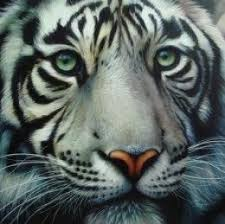 mer enn 25 bra ideer om tiger tattoo meaning på pinterest