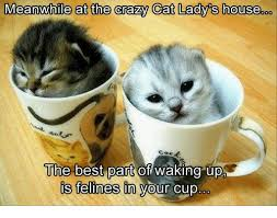 Crazy Cat Memes - meanwhile at the crazy cat lady s house the best part of waking upp