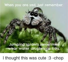 Cute Spider Memes - when you are sad just remember jumping spiders sometimes ear water