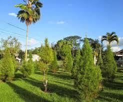 tree disposal home depot part 26 kubel1