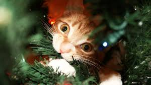 cat christmas a cat s guide to christmas