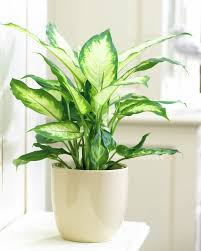 12 houseplants that can survive even the darkest corner