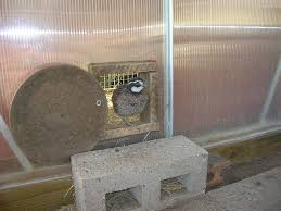 Air Conditioned Rabbit Hutch Housing And Feeding Your Quail Backyard Chickens